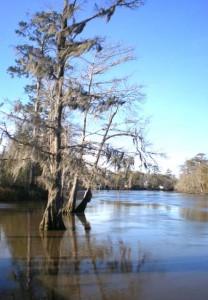 White Oak Park river 2 web