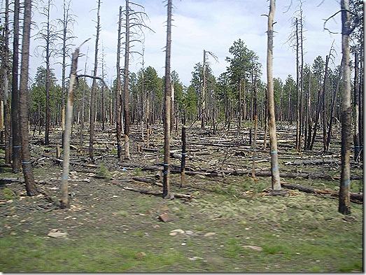 Burn area 4