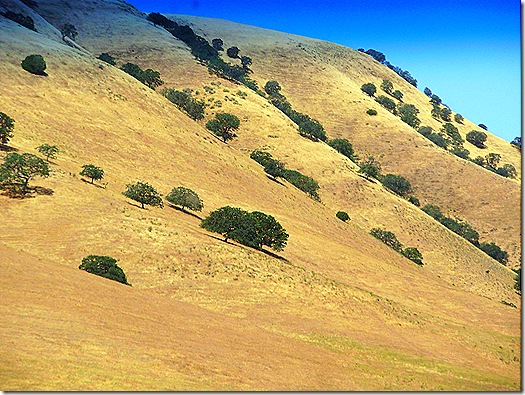 Steep california hillside