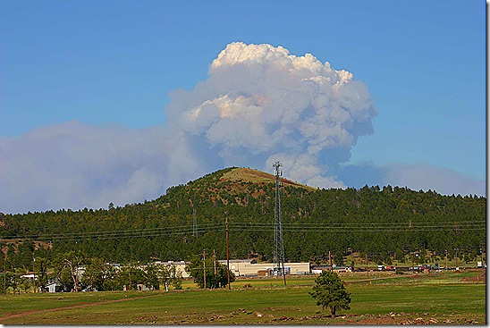 Williams forest fire 7