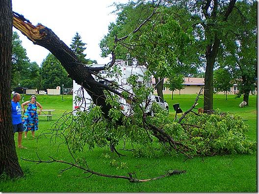 Tree down Spencer Park 2