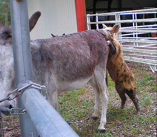 Dog and donkey porn