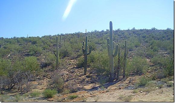 Cactus scenes 2