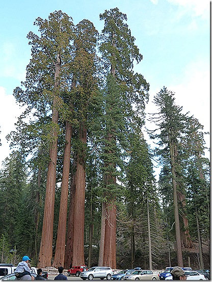 Big Sequoia parking lot