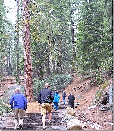 General Sherman trail
