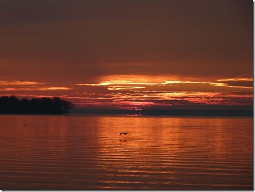 Celina bird sunrise