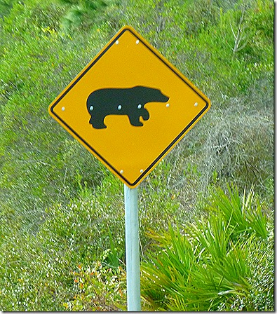 Bear crossing Florida