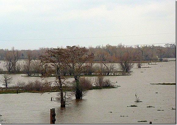 Louisiana wetlands 3