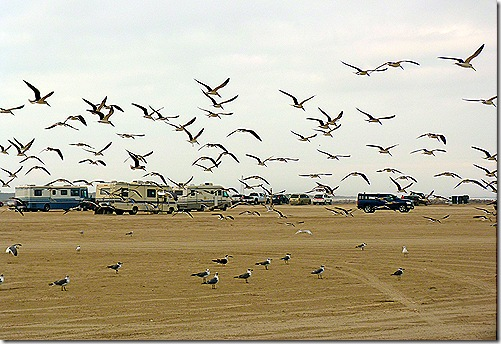 Bird flock 2