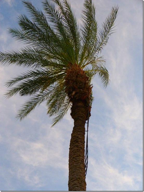 Tree ladder