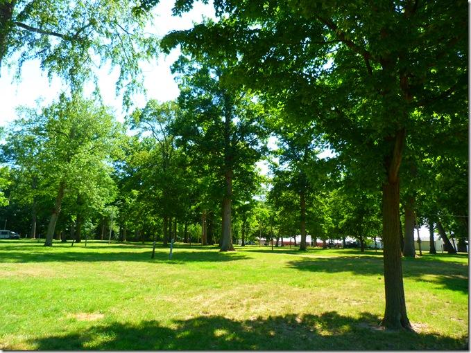 Fairground trees