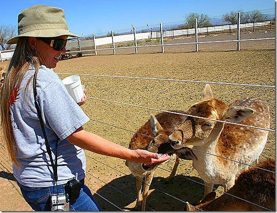 Terry feeding deer 2