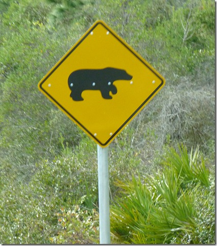 Bear crossing Florida