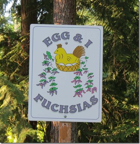 Egg and I Fuschias