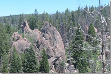 Rock dead tree