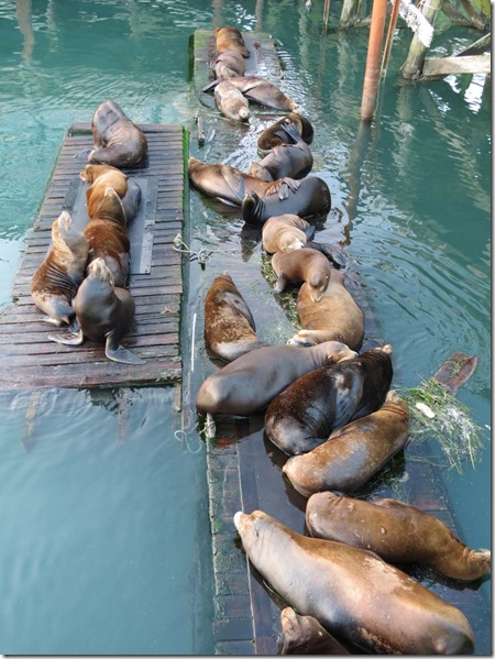 Sea Lions sleeping 2