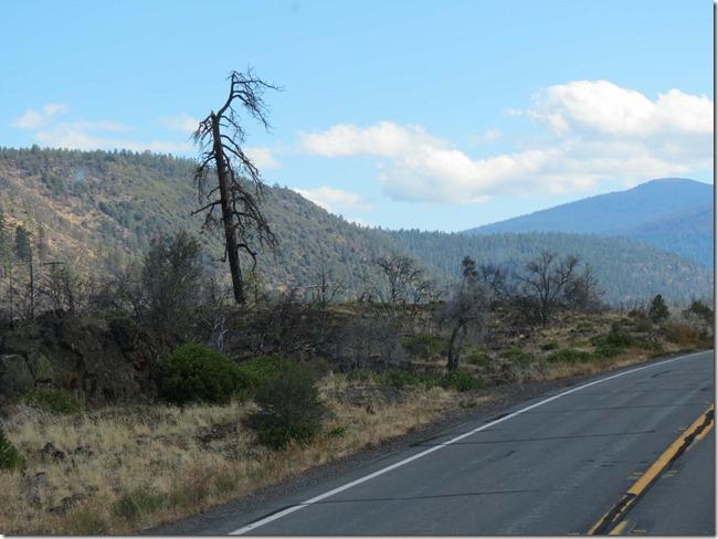 Burned tree
