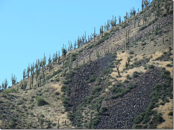 Cacti steep hillside
