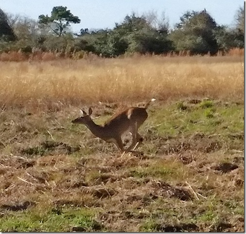 Running deer small