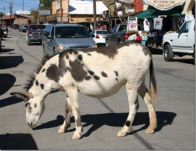 burro in street