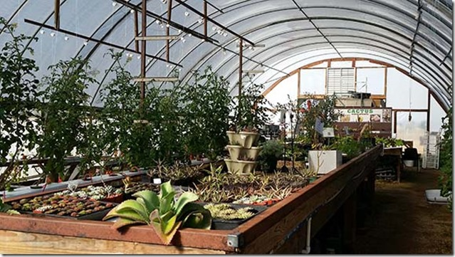 Greenhouse small