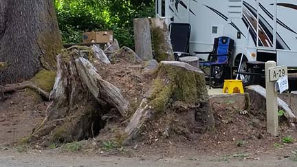RV site stumps small
