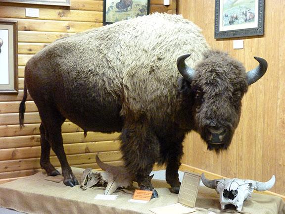 Buffao mount