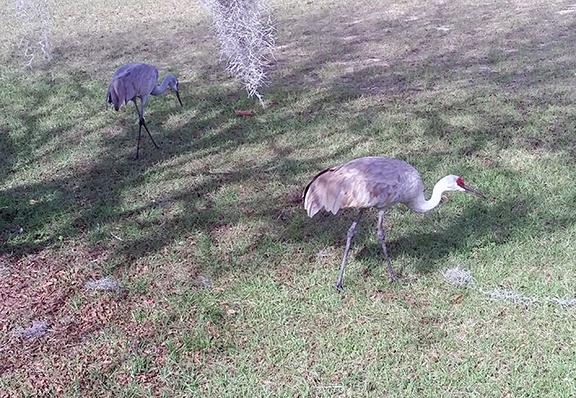 Two sandhills small