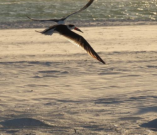 Birds small