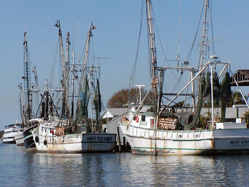tarpon springs fleet