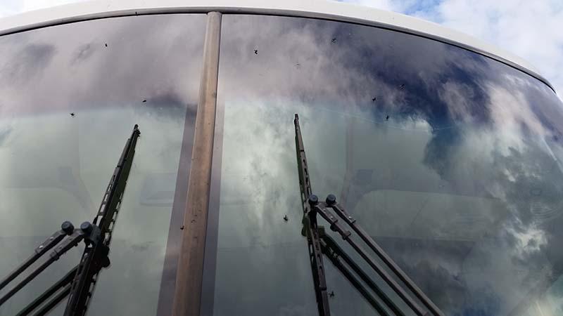 love-bugs-windshield